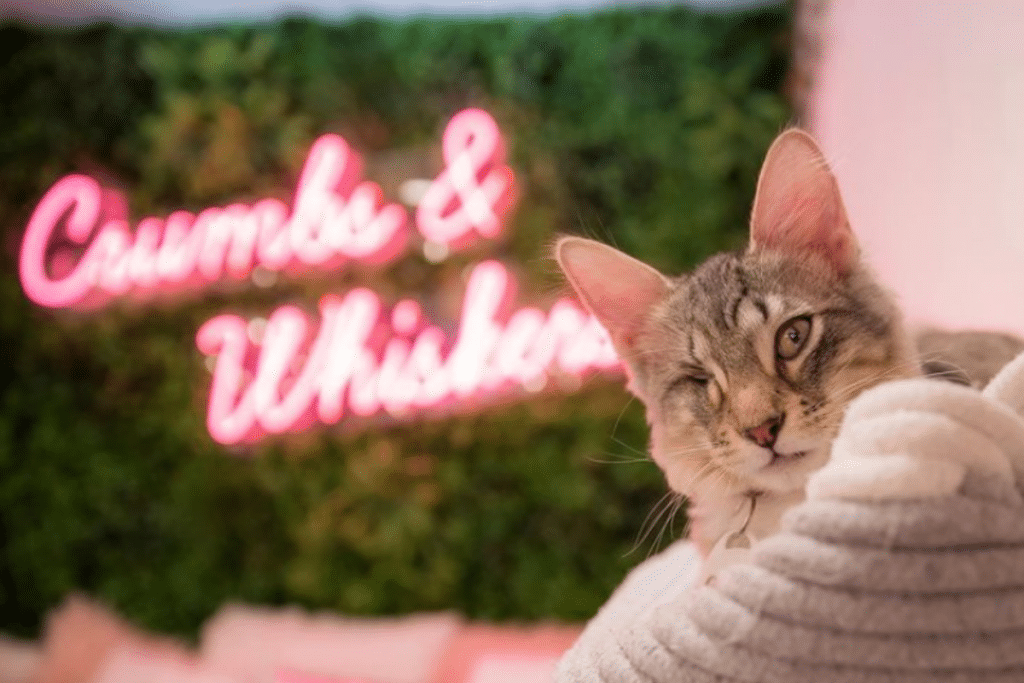 DC's First Cat Café Is Now Open & Has A Wholesome Mission