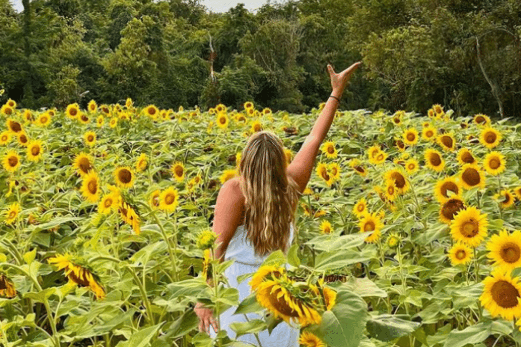 This Sunflower Field Is Currently Blooming In Maryland