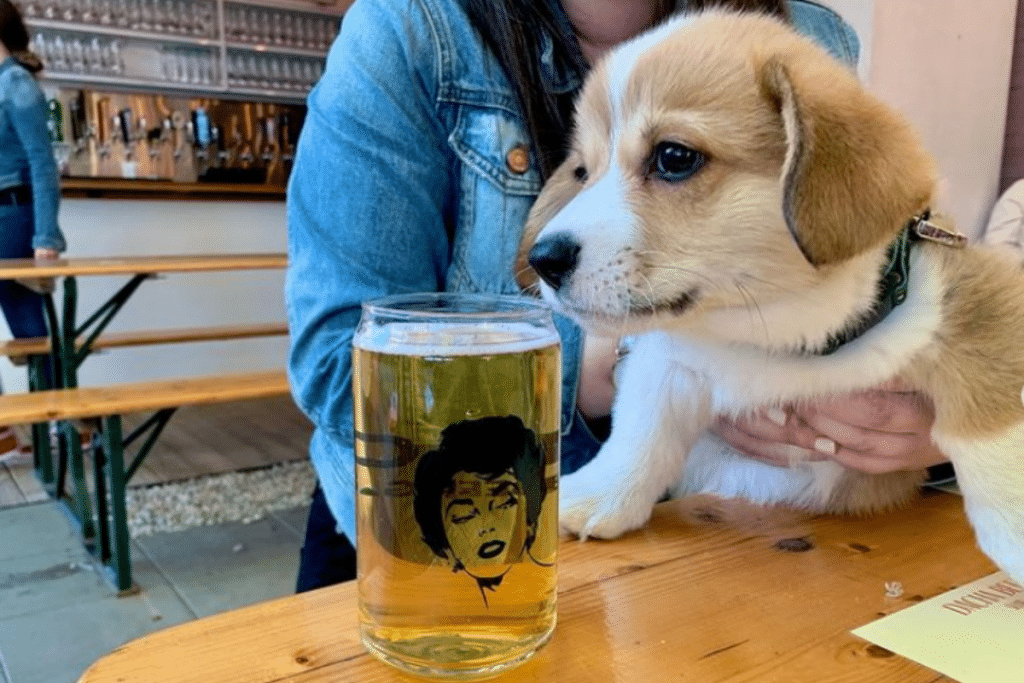 6 Dog-Friendly Beer Gardens Where You Can Hangout With Your Pupper In DC