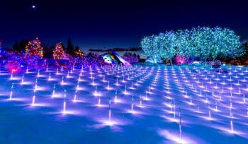 Denver's Blossom Of Lights Is Considered One Of The World's Most Spectacular Holiday Light Displays