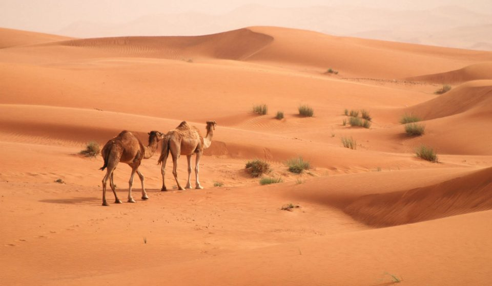 These Crazy Desert Shots Will Make You Want To Take A Safari