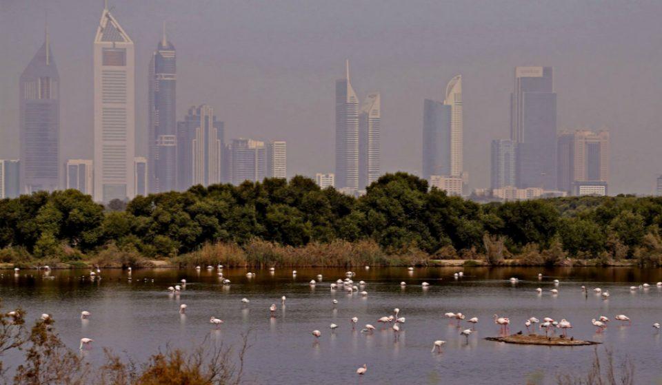 Discover Dubai's Hidden Gems