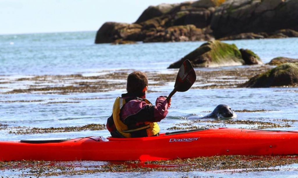 You Can Kayak With Seals In Dalkey (And It Should Be On Your Bucket List)