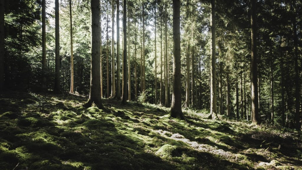 Ireland Plans To Plant 440 Million Trees By 2040 To Help Tackle Climate Change
