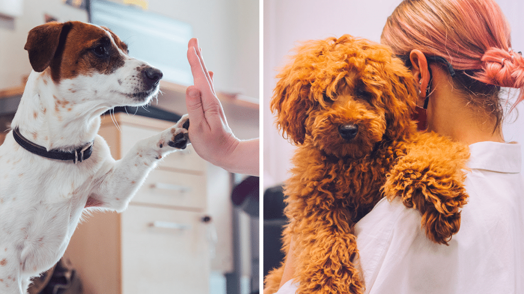 You Can Now Get Paid £24K To Play With Puppies In Manchester & Please Can This Come To Dublin