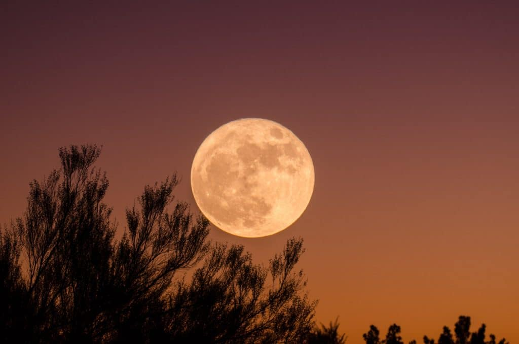 """""""Blumenmond"""": der größte Vollmond des Jahres strahlt heute Nacht"""