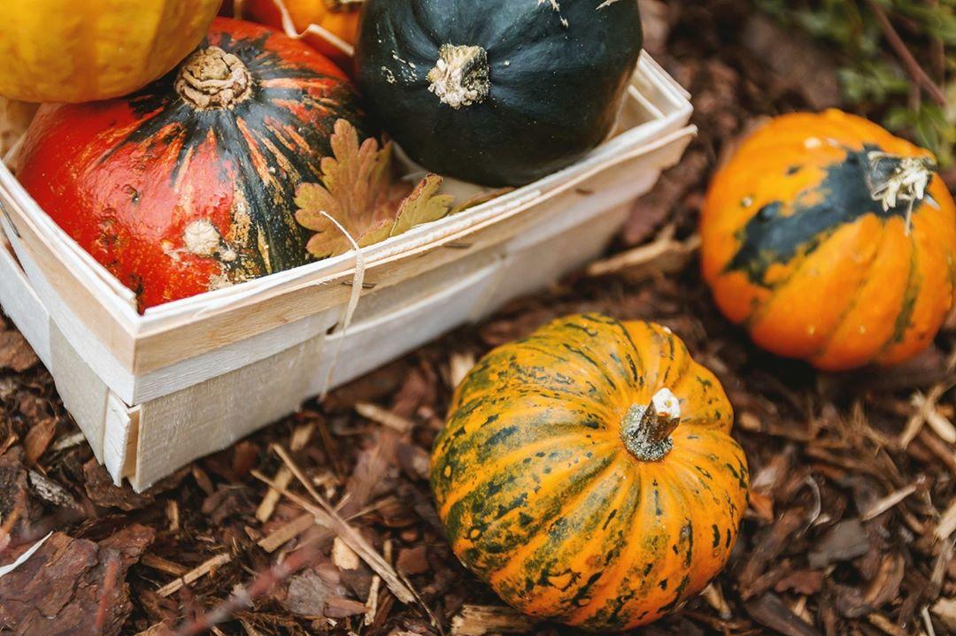 craigies farm shop pumpkin patch