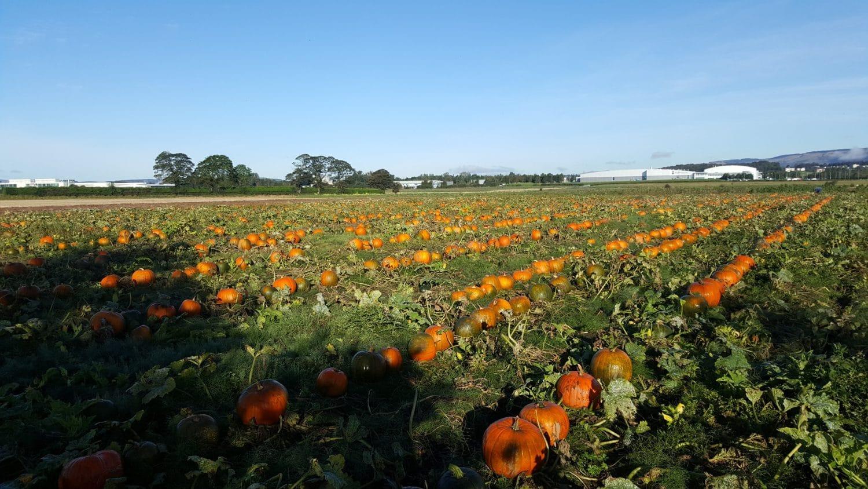 east yonderton farm pumpkin patch