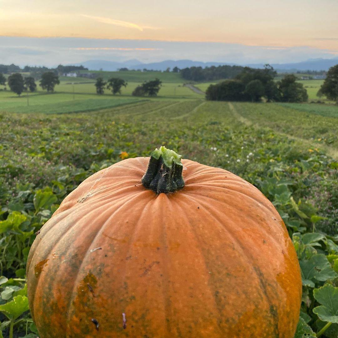 arnprior farm pumpkin patch