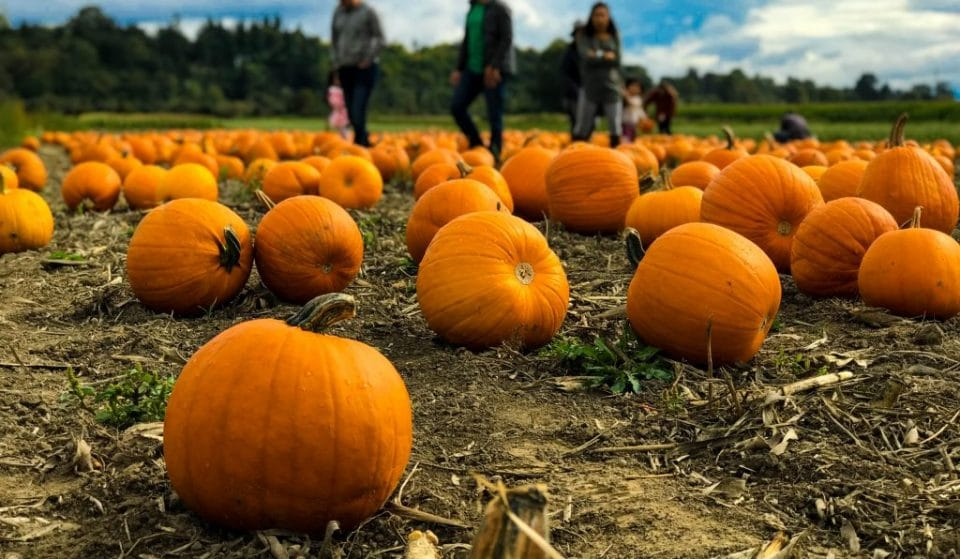 4 Pumpkin Patches Near Glasgow Where You Can Pick Your Own Pumpkins
