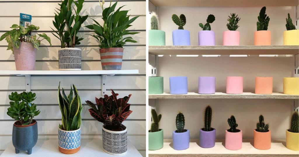 plant shops glasgow