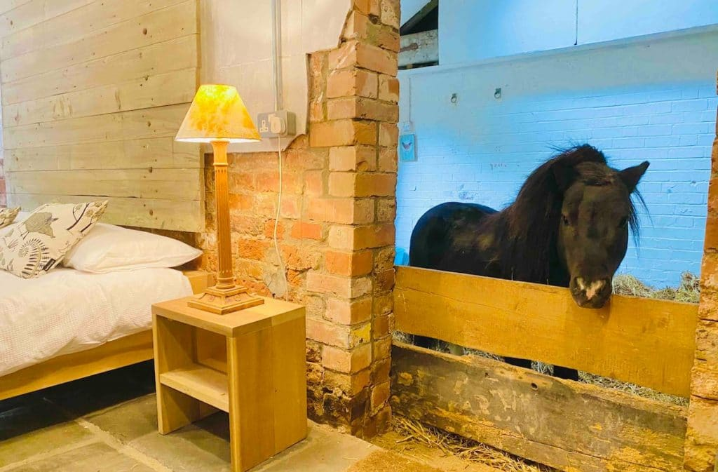 sleepover-miniature-horse-airbnb