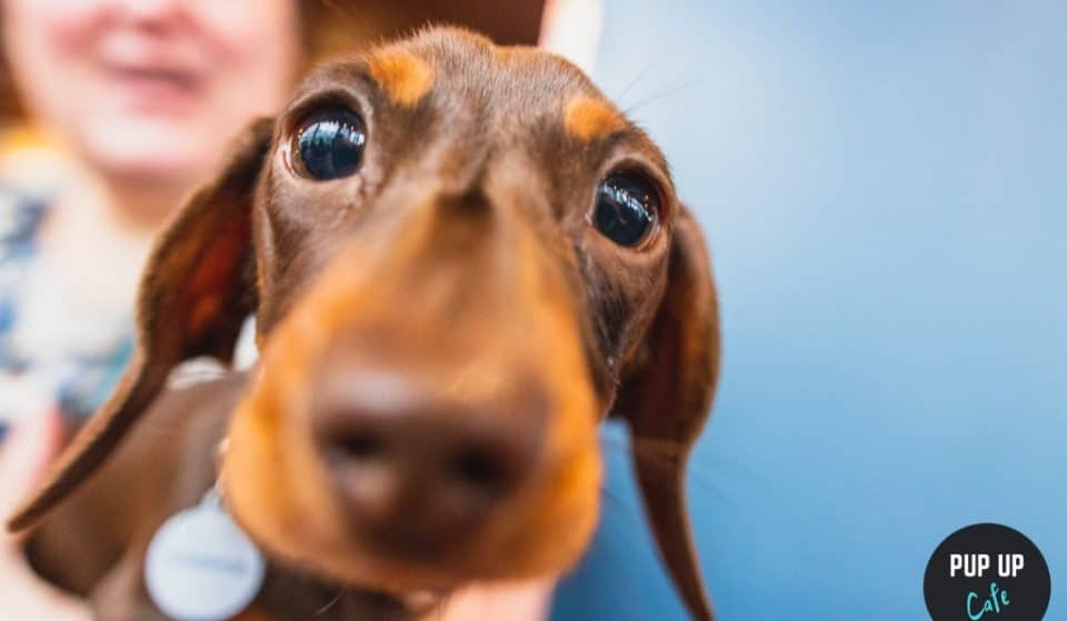 A Dachshund Pup-Up Cafe Is Coming To Glasgow, And It's Too Cute