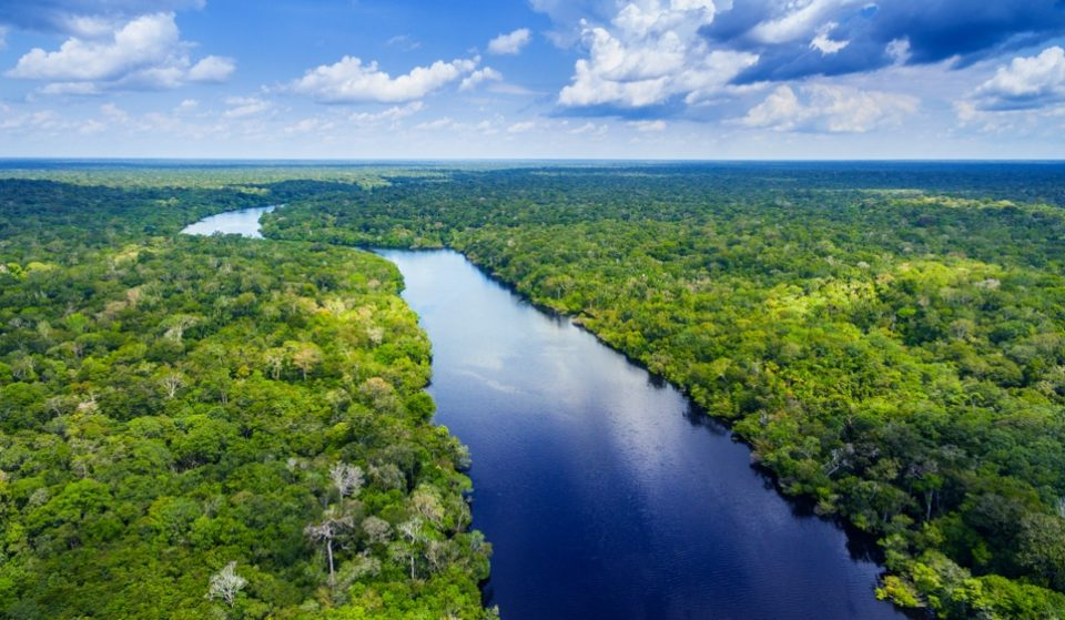 Amazon Rainforest Will Be Completely Destroyed By 2064, According To Expert