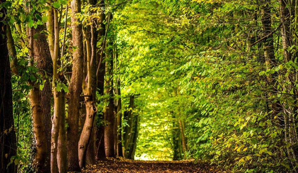 3 Ausflugsziele im Hamburger Umland für Naturliebhaber
