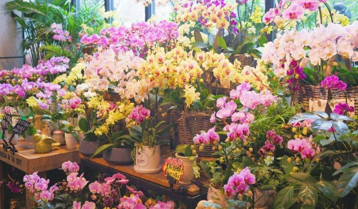 4 ganz besondere Blumenläden in Hamburg