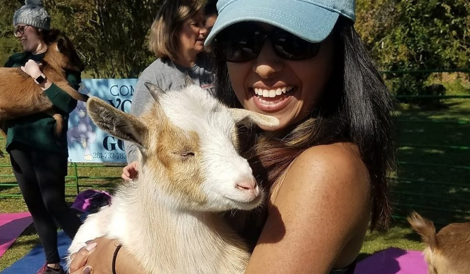Do Yoga With Baby Goats At This Backyard Pub In Houston