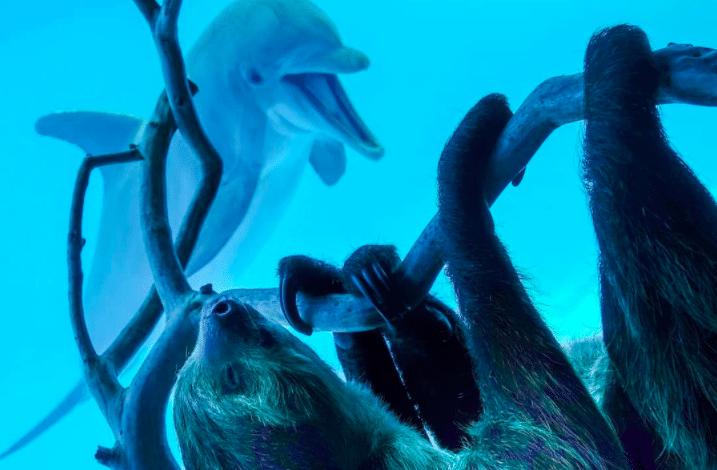 This Video Of A Sloth Exploring A Texas Aquarium Is Just Too Adorable