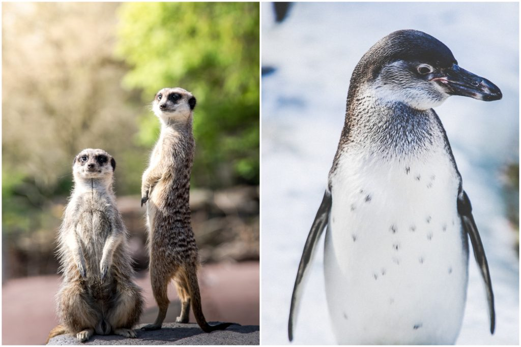 Copenhagen Zoo Is Officially Reopening On Thursday