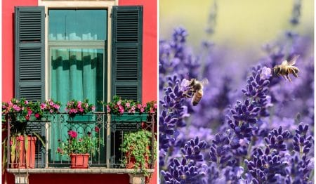 8 Tasty Herbs That Will Turn Your Balcony Into A Haven For Bees