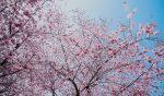 5 schöne Tipps für das kommende Osterwochende