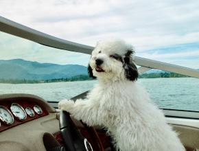 Das sind die lustigsten Haustierfotos des Jahres