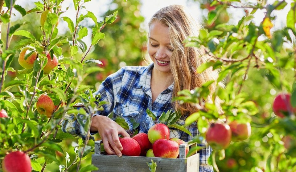 Get In The Autumnal Mood Apple And Pumpkin Picking In Vegas
