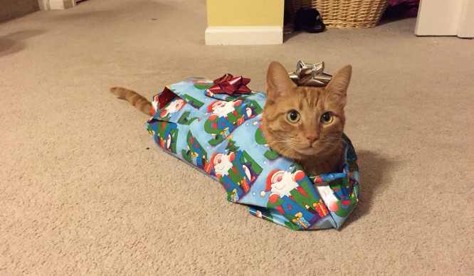 23 Reasons You're Reading This On Christmas Day