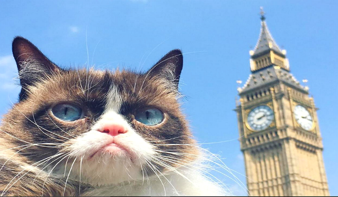Meow! The Infamous Grumpy Cat Visits London