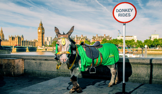 Talking Donkeys Are Coming To The South Bank