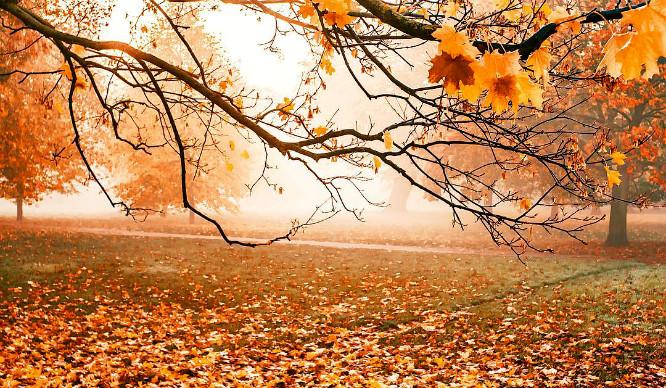 autumn-feature-1