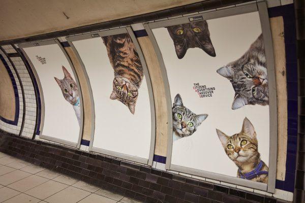 cats-adverts-london-clapham