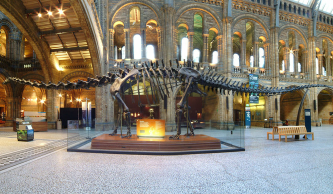 Dippy The Dinosaur Is Leaving The Natural History Museum!