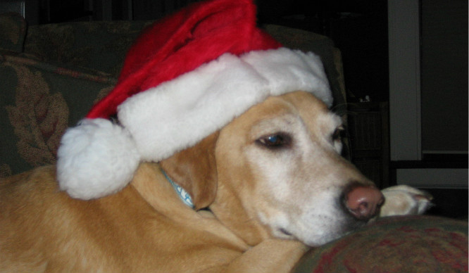 18 Reasons You're Reading This On Christmas Day