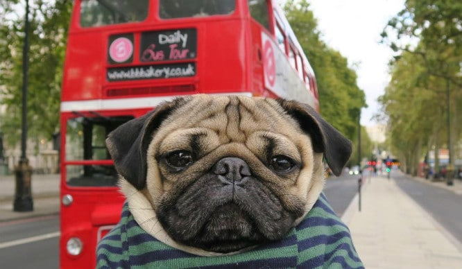 A Bus Tour For Dogs Is Coming To London This Month!