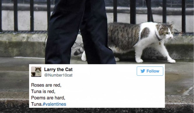 Valentines Wishes From Larry The Cat And Other Londoners