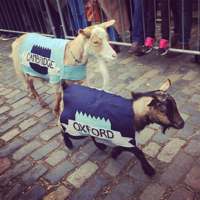 Oxford and Cambridge Goat Race