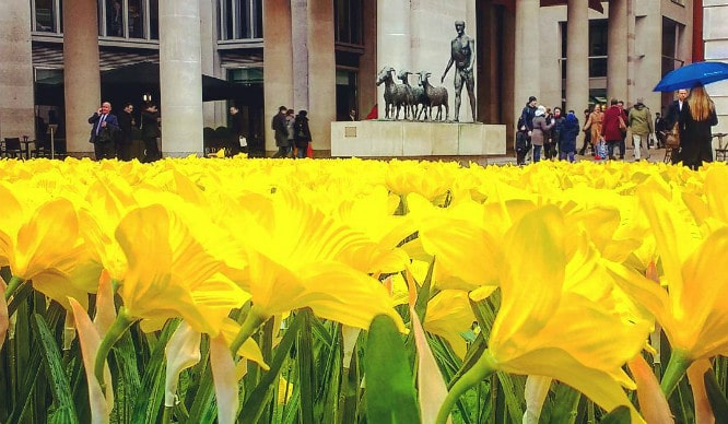 A Field Of Daffodils Opened Up In London Today And It Looks Beautiful