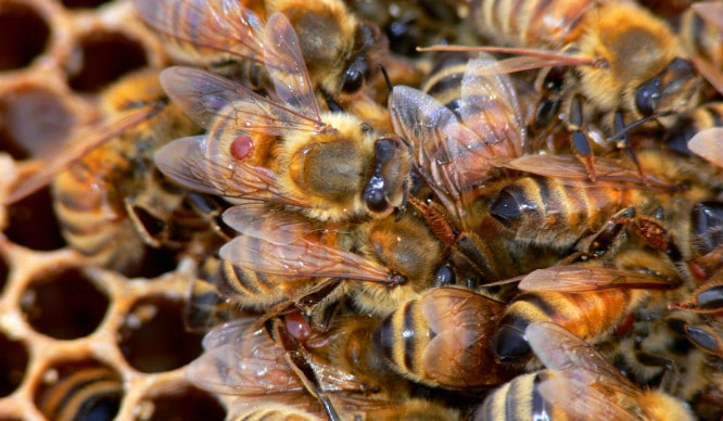 Watch A Terrifying Swarm Of Bees Descend On Greenwich Last Night