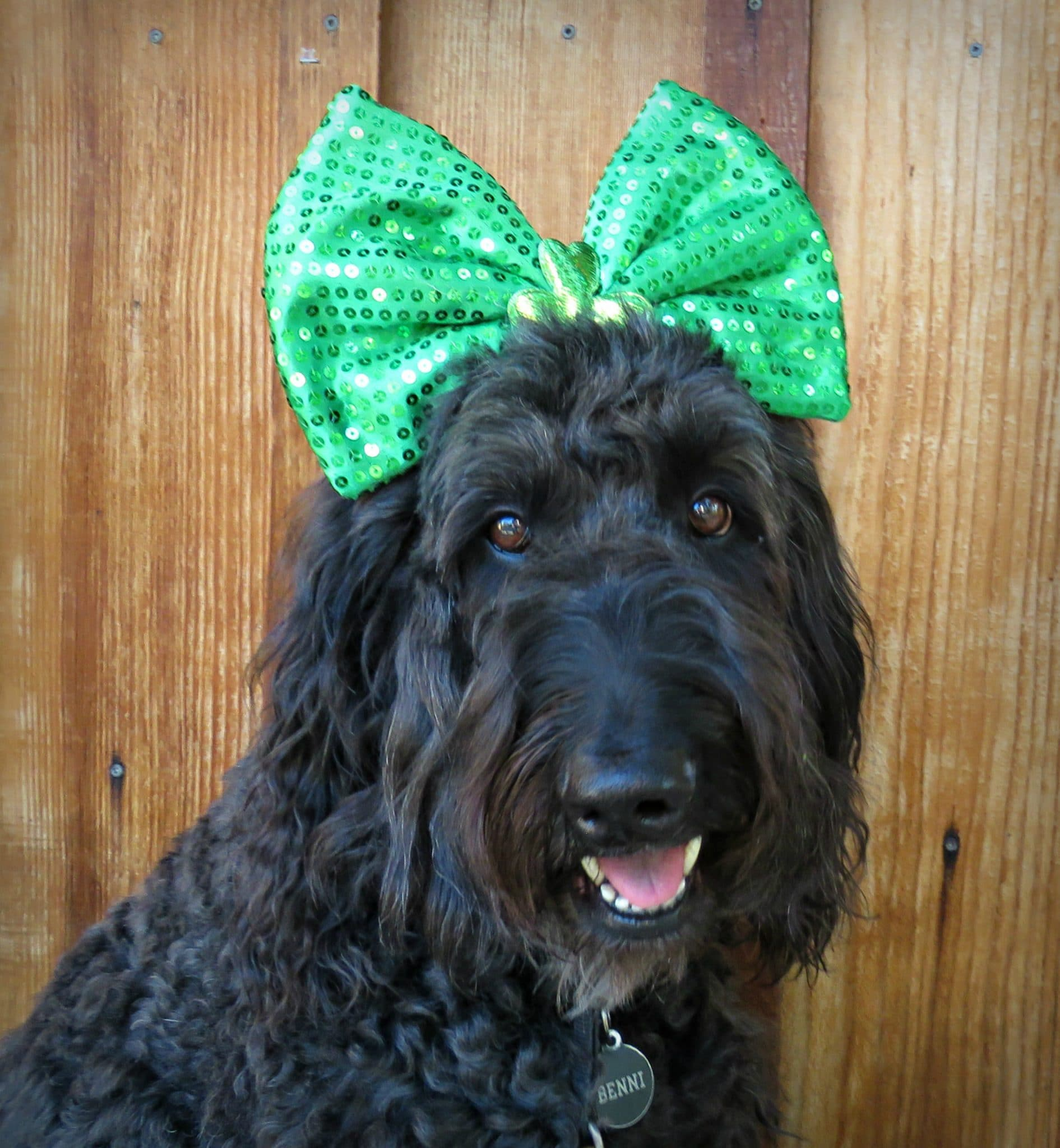 dog-bow