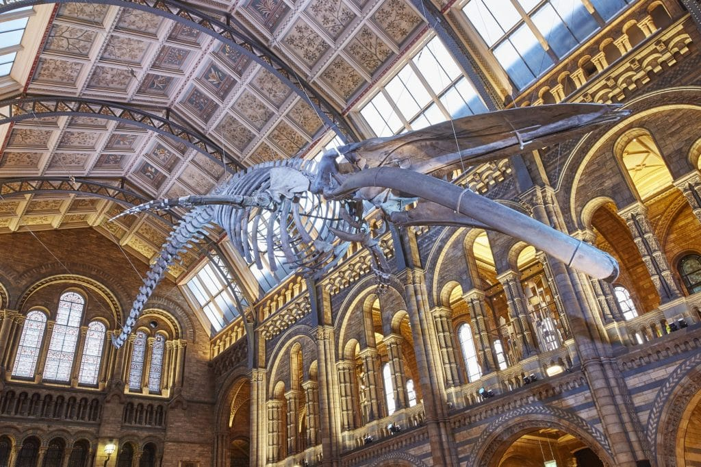 Meet Hope The Whale: Natural History Museum's Hintze Hall Officially Reopens Today