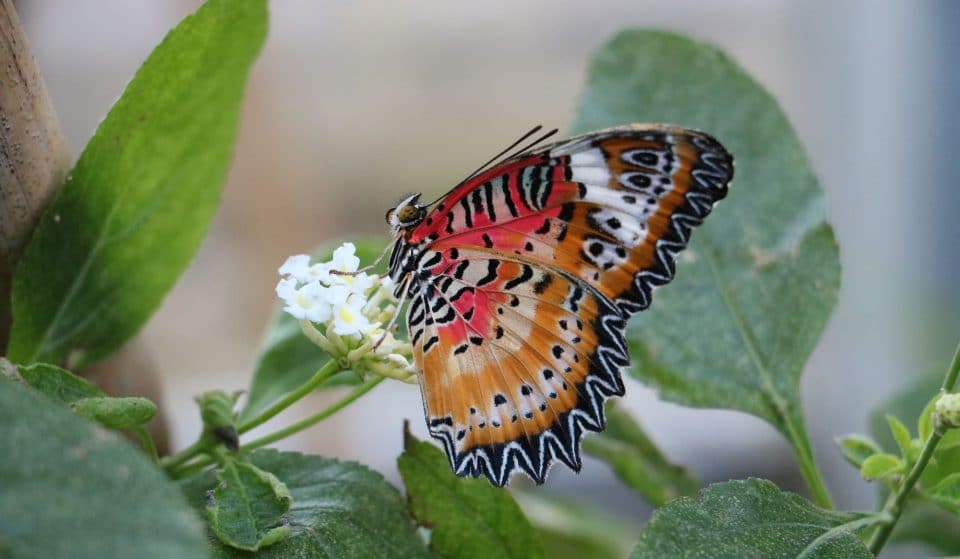 Feel All Aflutter At This South London Butterfly House •The Butterfly House At The Horniman