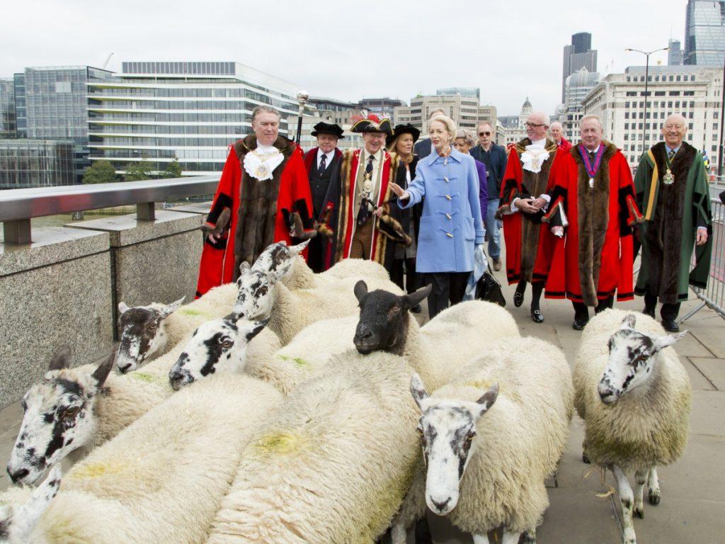 Sheep herding London