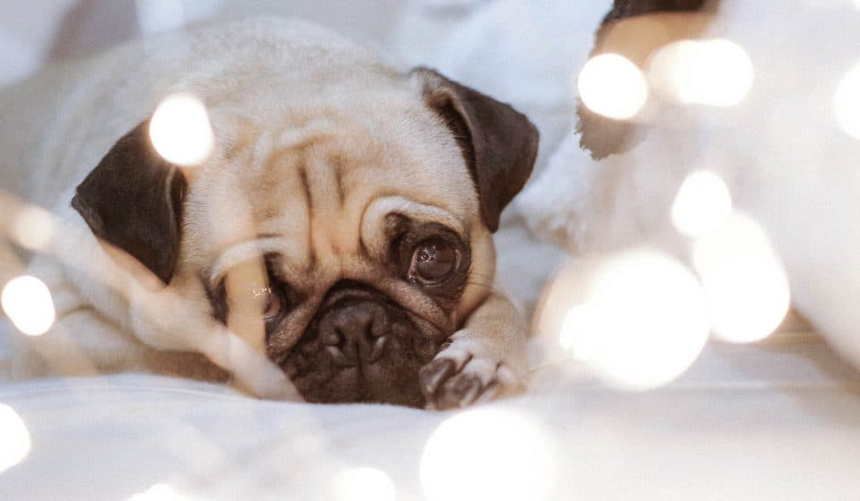 Another Pug Pop-Up Is Coming To London, So Get Ready For Some Appawling Puns