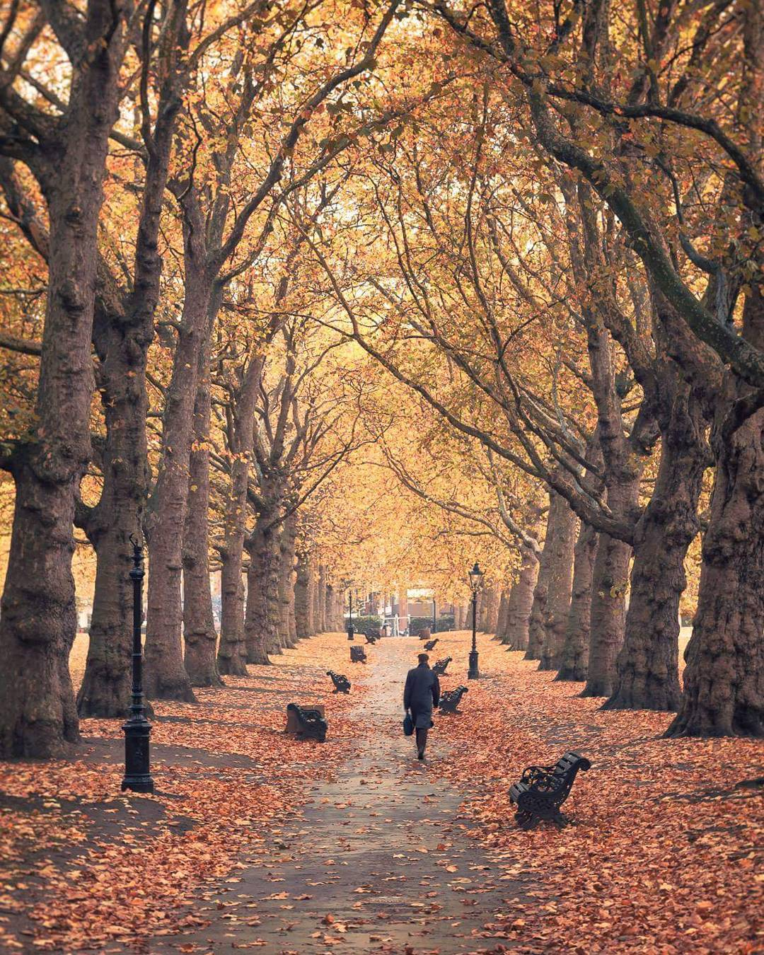 Green Park in the autumn
