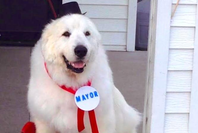 Dog Mayor Duke Cormorant Minnesota