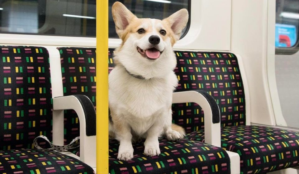 33 Pictures Of Dogs On The Underground That Will Brighten Your Day