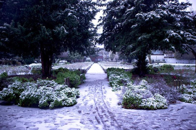 Snow London Kilburn