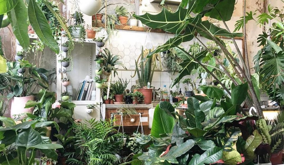 This Beautiful Hackney Store Is A Plant Lover's Paradise • Conservatory Archives