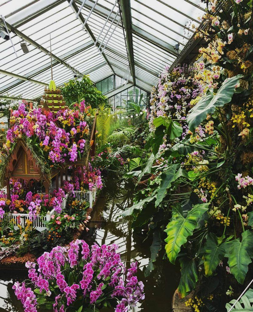 orchids-1